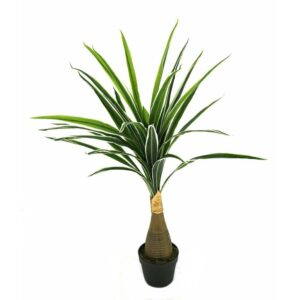 Artificial Botton Green Yucca White Edge 100 CM - Aramis Trading