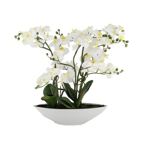 5 Pcs Butterfly White Orchid On White Ceramic Pot - Aramis Trading