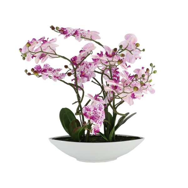 5 Pcs Butterfly Pink&Purple Orchid On White Ceramic Pot - Aramis Trading