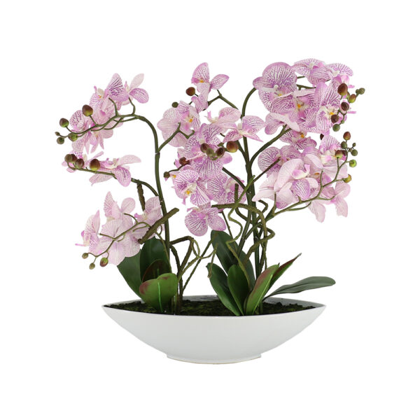5 Pcs Butterfly Pink Orchid On White Ceramic Pot