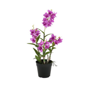 4 Pcs Satin Butterfly Orchid On Black Plastic Pot- Aramis Trading